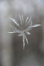Frost2