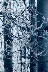 WinterLace